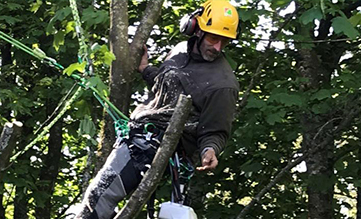 Working at Height in trees, one or two ropes?
